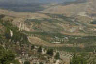 Национальный парк Курси
